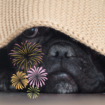 Dogs & Fireworks
